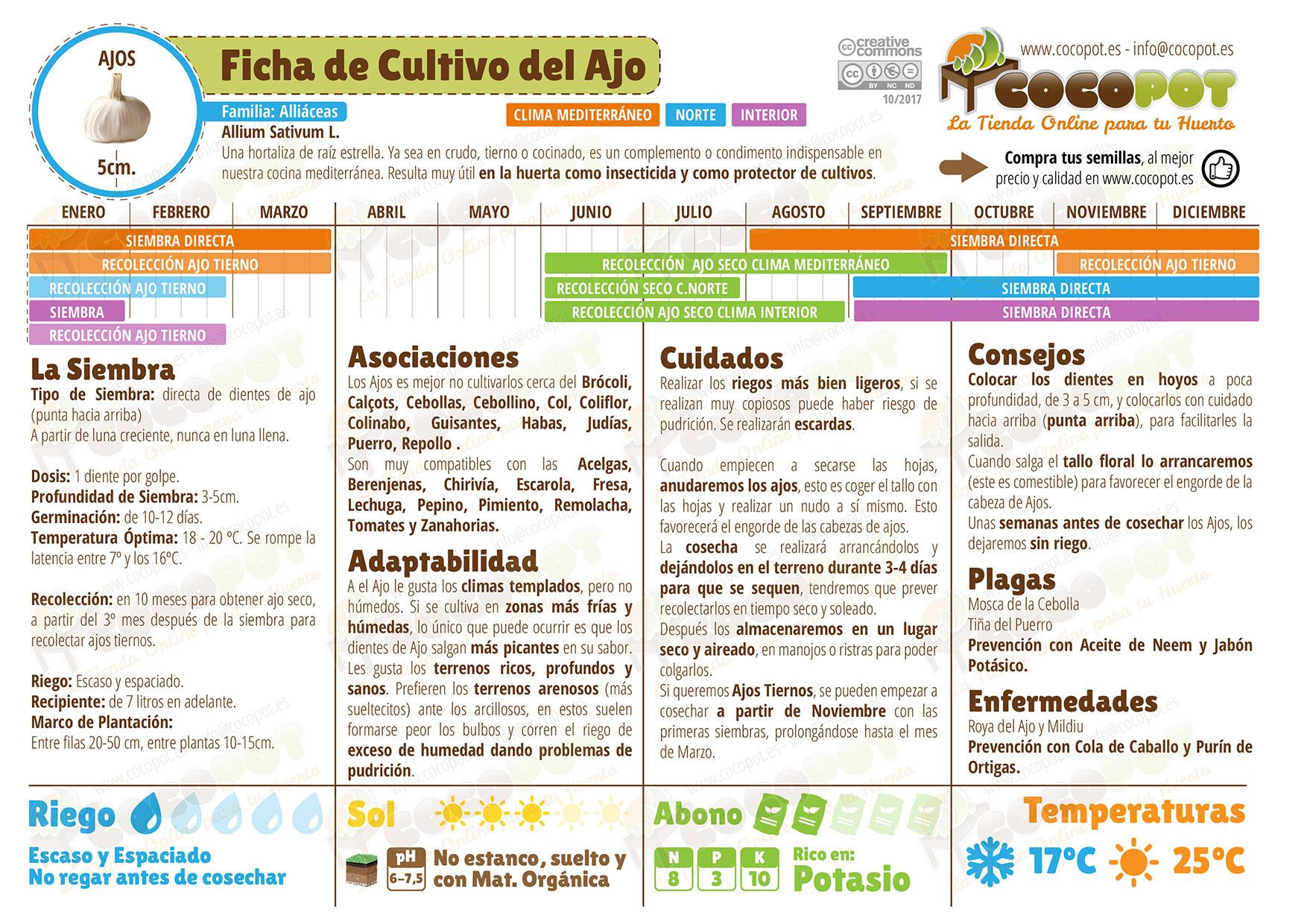 Ficha cultivo ajos