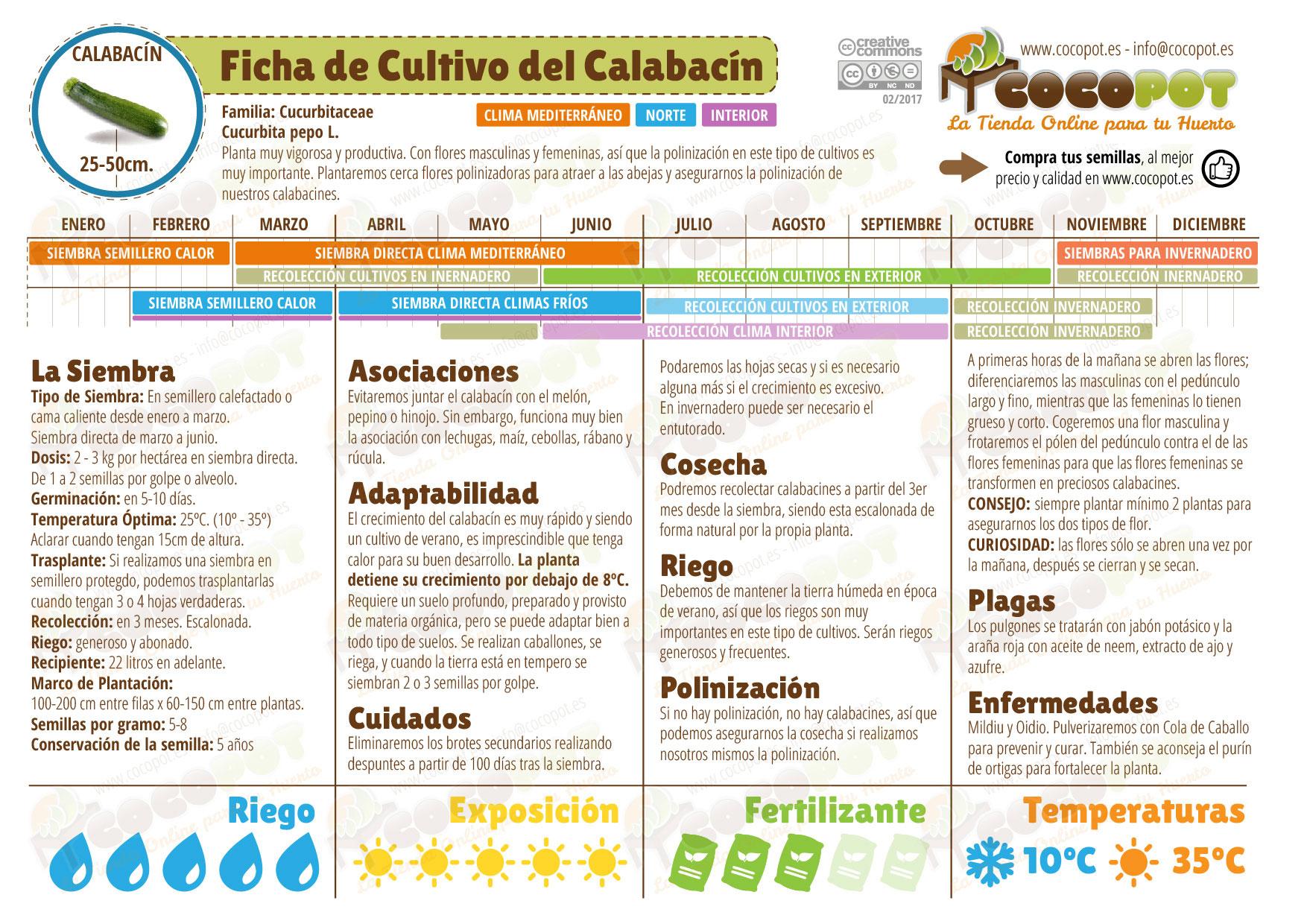 Ficha cultivo calabacin