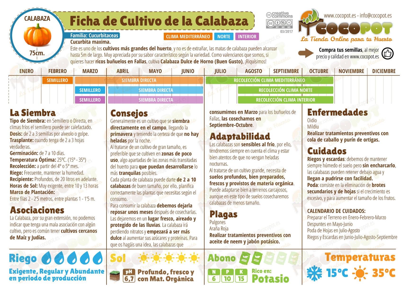 Ficha cultivo calabaza
