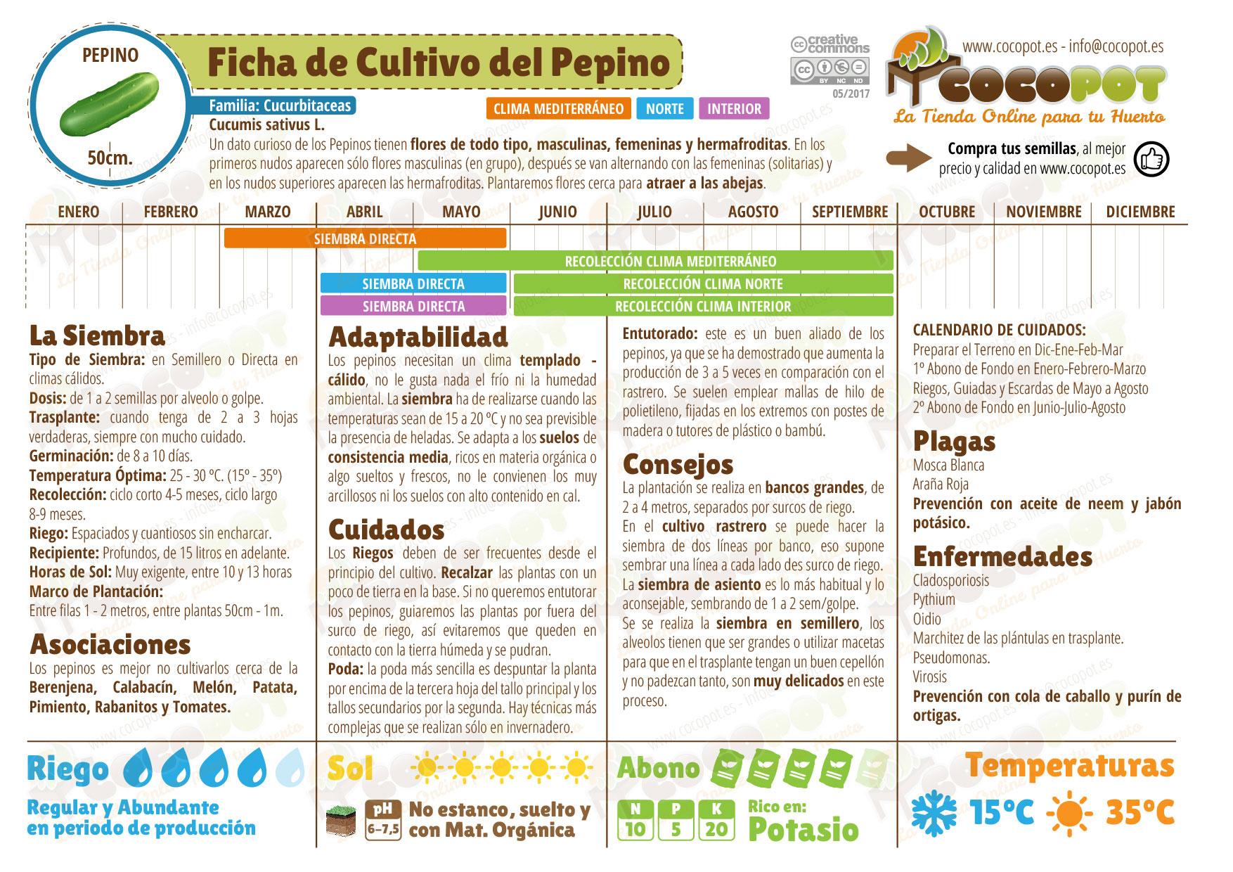 Ficha cultivo pepino