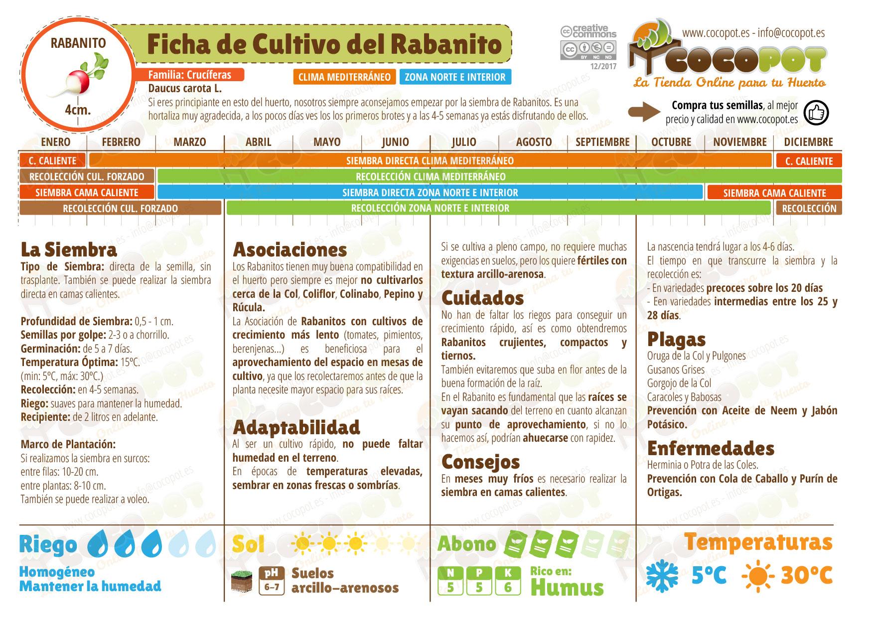 Ficha cultivo rabanitos