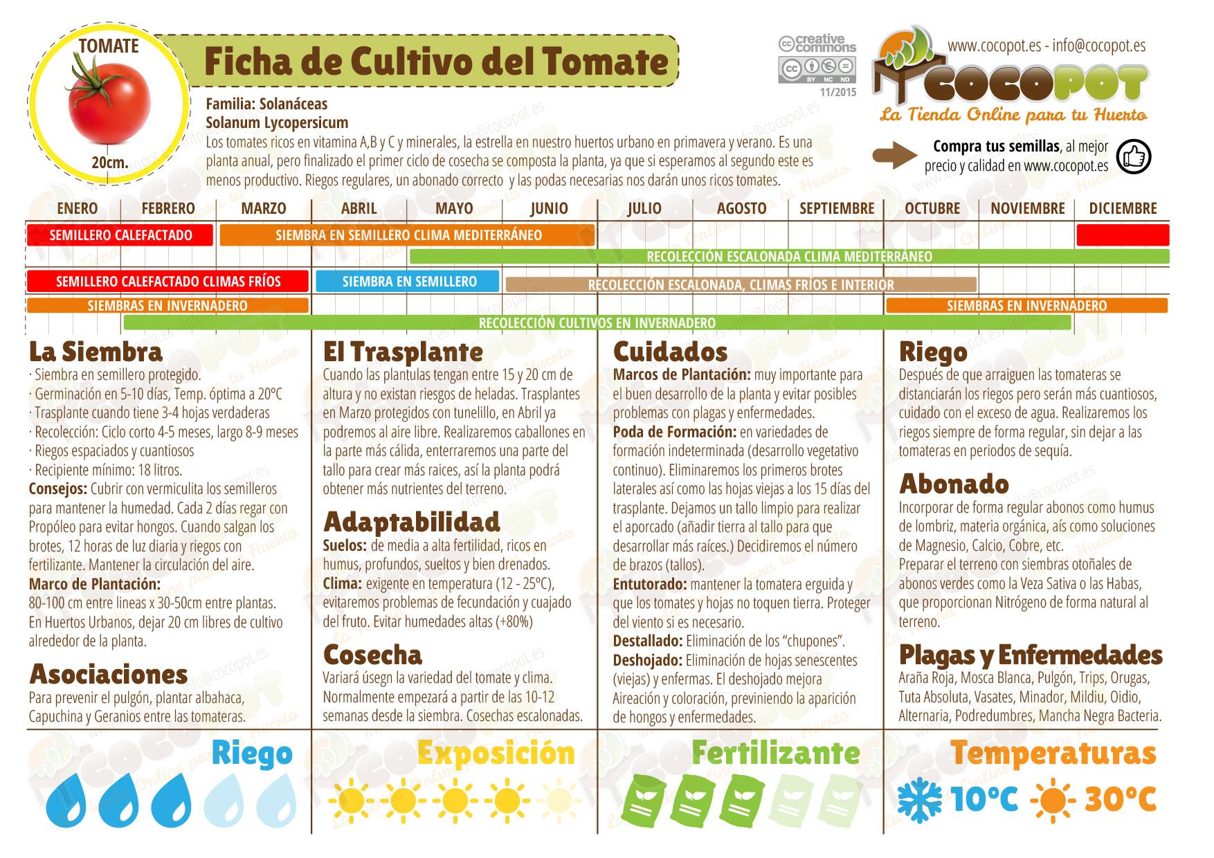 Ficha cultivo tomate
