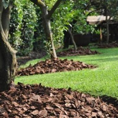 Img beneficios de la corteza de pino para el jardin 869 600