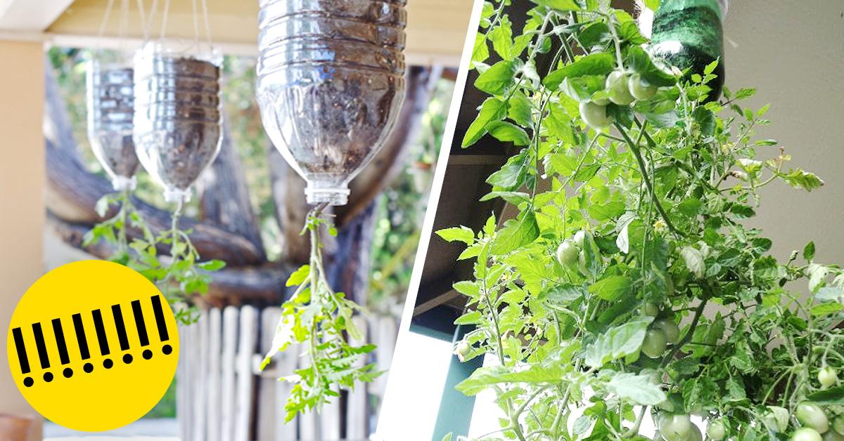 Plantar tomates botellas plastico banner